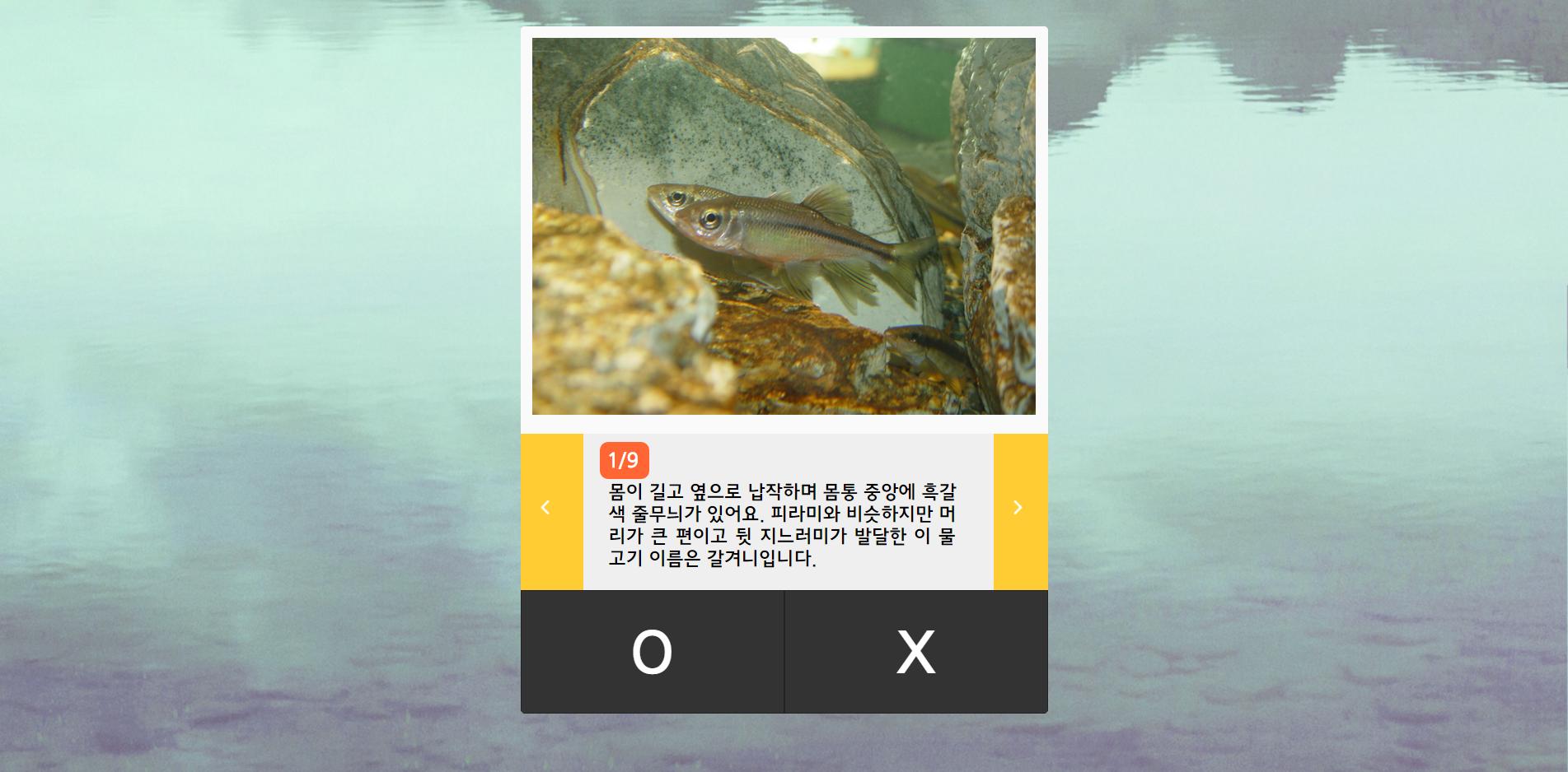 민물고기OX퀴즈_02