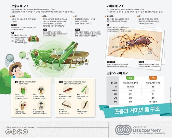 [미래엔] 브리태니커'곤충과 거미의 몸 구조'
